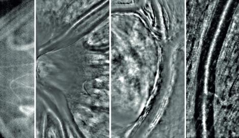 imagerie vaisseaux