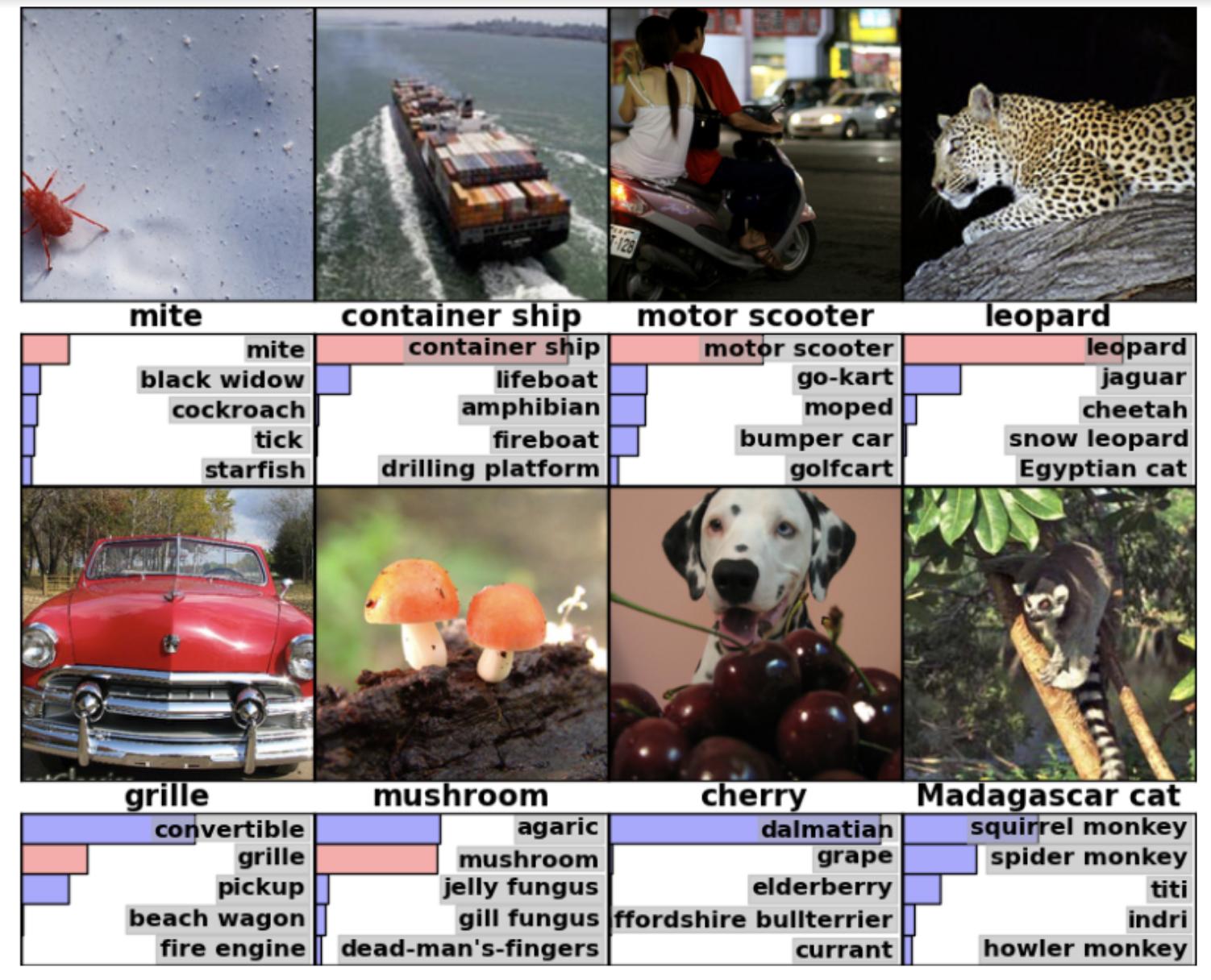 Classification d'images de ImageNet par le modèle AlexNet [4].