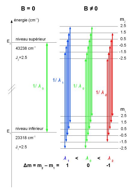 Schéma des transitions possibles du FeII autour de λ0=501,845nm entre les sous-niveaux Zeeman.