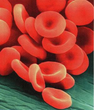 Écoulement du sang