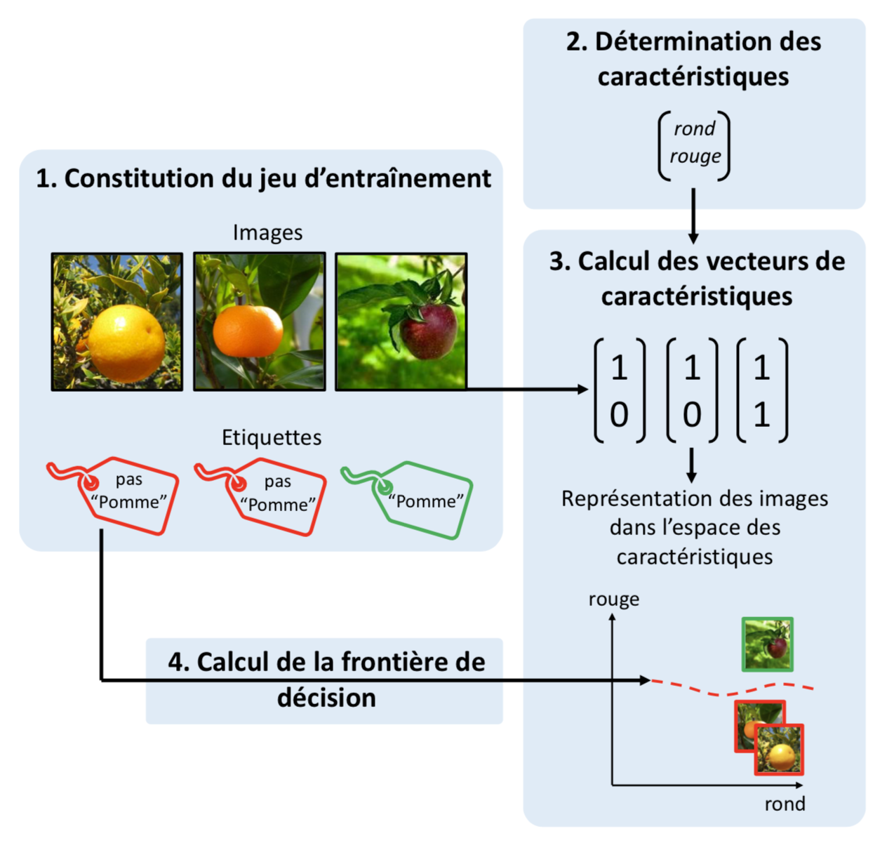 Schéma représentant les étapes d'entraînement d'un algorithme d'apprentissage automatique pour une détection de pommes dans des images